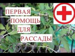 Юлия Минаева\Первая Помощь для Рассады при Заморозках.
