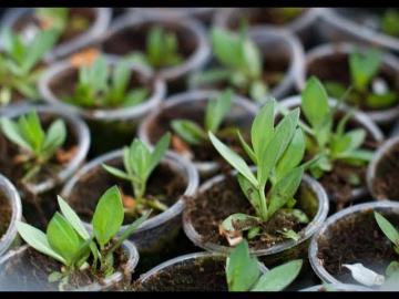 ПЕРВЫЕ ШАГИ ПРИ ВЫРАЩИВАНИИ ЭУСТОМЫ | Урожайный Огород