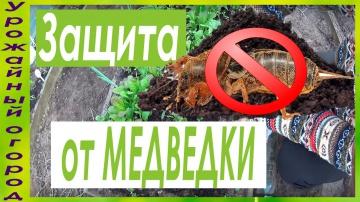 Урожайный огород СУПЕР СПОСОБ ЗАЩИТЫ РАССАДЫ ОТ МЕДВЕДКИ!