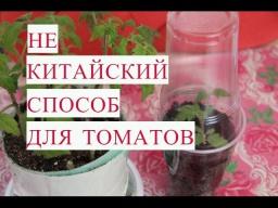 Юлия Минаева -  Не Китайский Способ Выращивания Рассады Томатов.