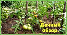 Ольга Уголок -  VLOG. Дачный обзор. Что выросло. Как получить второй урожай редиса.