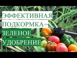 Юлия Минаева -  Очень Эффективная Подкормка для Растений - Зеленое Удобрение.
