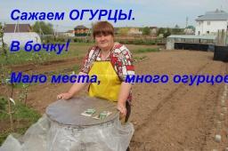 Юлия Минаева -  Сажаем огурцы. В бочку! Мало места, много огурцов!