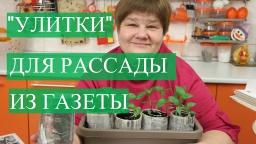 Юлия Минаева -  Рассада в Улитке из Газеты.