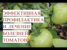 Юлия Минаева -  Болезни Томатов Эффективная Профилактика и Лечение Болезней Томатов