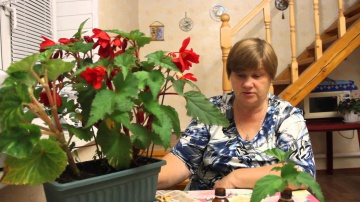 Юлия Миняева Секрет укоренения комнатных растений. Бегония.