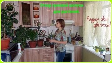 Ольга Уголок Как приготовить отвар луковой шелухи для комнатных растений.