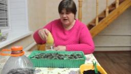 Юлия Минаева - Секреты выращивания земляники.