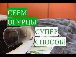 Юлия Минаева\Посадка Огурцов Эффективный Способ Легкий Уход Крепкая Рассада
