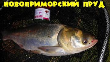 Рыбалка в Новоприморке Новоприморский пруд Ловля карпа и толстолоба