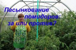 Юлия Минаева -  Пасынкование томатов: за или против?/Growing tomatoes.