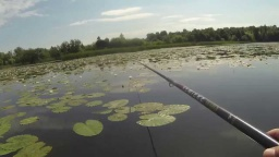 Ловля крупного карася на удочку с боковым кивком на дикой речке Видео