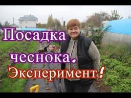 Юлия Минаева -  Посадка чеснока. Эксперимент.