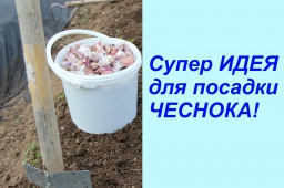 Юлия Минаева -  Супер ИДЕЯ для посадки ЧЕСНОКА!