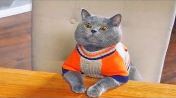 Приколы с Котами - Смешные коты и кошки 2017 | ПОПРОБУЙ НЕ ЗАСМЕЯТЬСЯ - смешное видео про котов