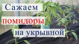 Юлия Минаева -  Посадка томатов на укрывной материал в теплицу 13.05.16
