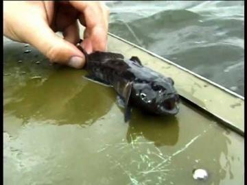 """Ловля Бычка на водохранилище дедовской снастью. """"О Рыбалке Всерьез"""" видео 11."""