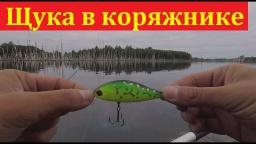 Ловля щуки на воблеры в коряжнике - рыбалка на щуку в конце августа | Простая рыбалка