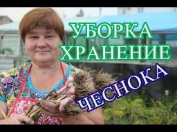 Юлия Минаева - Советы по Уборке и Хранению Чеснока 27.07.16