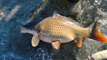 Рыбалка карпа со льда Подводные съемки | Зимняя рыбалка с Михалычем