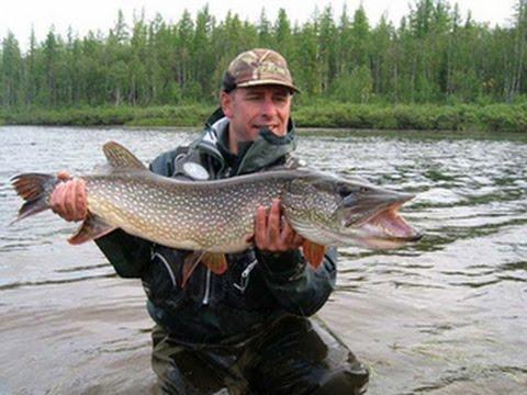 Сибирская щука в Диалогах о рыбалке