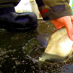 Экшн-рыбалка. Плотва, Иваньковское водохранилище. Второй первый лед :) [salapinru]