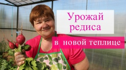 Юлия Минаева -  Урожай редиса в новой теплице. (13.05.2016)