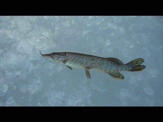 "Рыбалка в марте, озеро ""Белое""."
