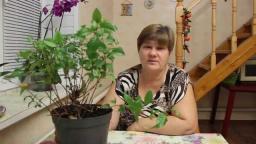 Юлия Минаева -  Необычайно красивый комнатный цветок.