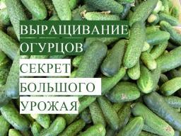 Юлия Минаева -  Важно знать!  Выращивание Огурцов. В Чем Залог Успеха. (20.05.17)
