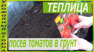 Урожайный огород Безрассадный способ выращивания томатов