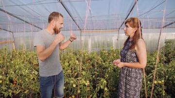 Урожайный огород  КАК СОЗДАЮТСЯ НОВЫЕ ТОМАТЫ