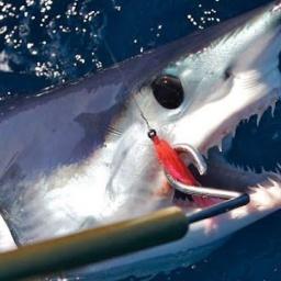 Рыбалка на акулу: Как ловить акулу