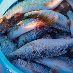 Зимняя рыбалка: жор плотвы на водохранилище. Поплавок, мормышка. [salapinru]