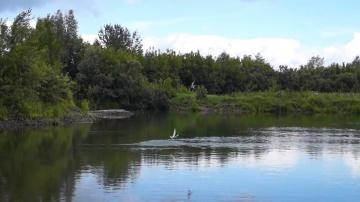 Окунь ловля на поппер, уокер | Рыбалка на попперы