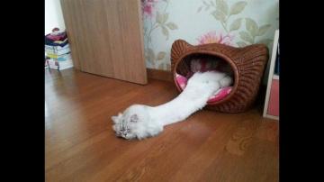 Я РЖАЛ ПОЛ ЧАСА. Смешные Коты и Собаки. ПРИКОЛЫ С ЖИВОТНЫМИ. Cute Cats #121