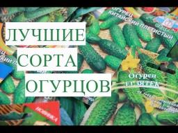 Юлия Минаева -  Лучшие Урожайные Сорта Огурцов Мои Предпочтения
