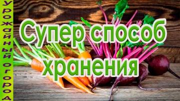 Урожайный огород СУПЕР СПОСОБ ХРАНЕНИЯ МОРКОВИ И СВЕКЛЫ!