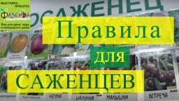 Юлия Минаева -  Правила для саженцев плодово-ягодных. Ответ специалиста.