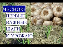 Юлия Минаева -  Чеснок Первые Важные Шаги к Урожаю