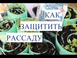 Юлия Минаева\Кто Съел мою Рассаду Как Защитить Рассаду