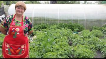 """Юлия Минаева Жизнь за кадром. Часть 7. Киноляпы от """"Во саду ли в огороде""""."""