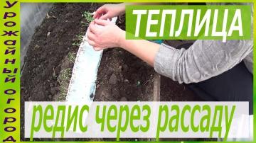 Урожайный огород РАССАДА РЕДИСА БЕЗ ЗЕМЛИ!ПОСАДКА В ГРУНТ!