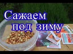 Юлия Минаева -  Посадка лука под зиму Сорта моркови, свеклы под зиму 18.10.16