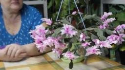 Юлия Минаева -  Этот цветок - зимнее чудо!